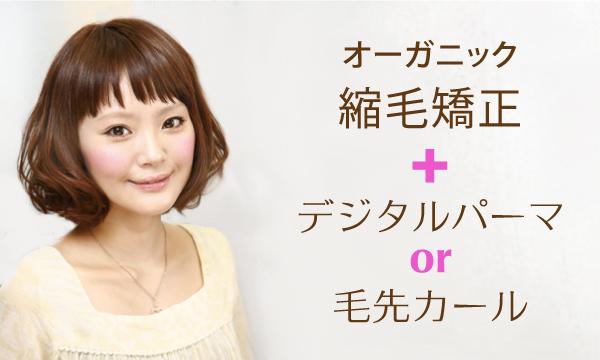 オーガニック縮毛矯正+デジタルパーマ or 毛先カール